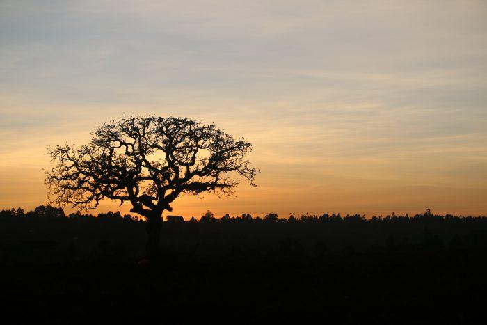 国際協力も後押し! 再生可能エネルギーを推進するケニア共和国