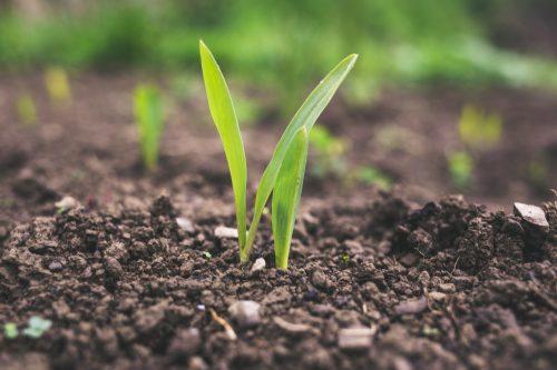 農業と発電を両立する営農型太陽光発電(ソーラーシェアリング)とは
