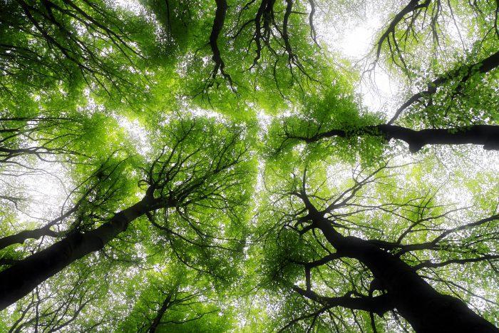 環境保全・減災・雇用創出を一手に担う「自伐型林業」への期待