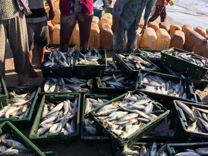 幻の食材となっていく海産物 その資源を守り持続可能な漁業を未来に繋ぐ取り組みとは