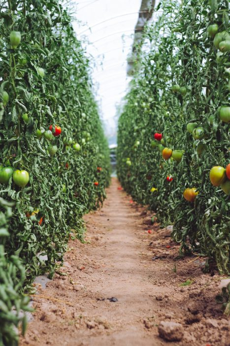 自然農法と有機農法、環境保全型農業の課題と理想の未来