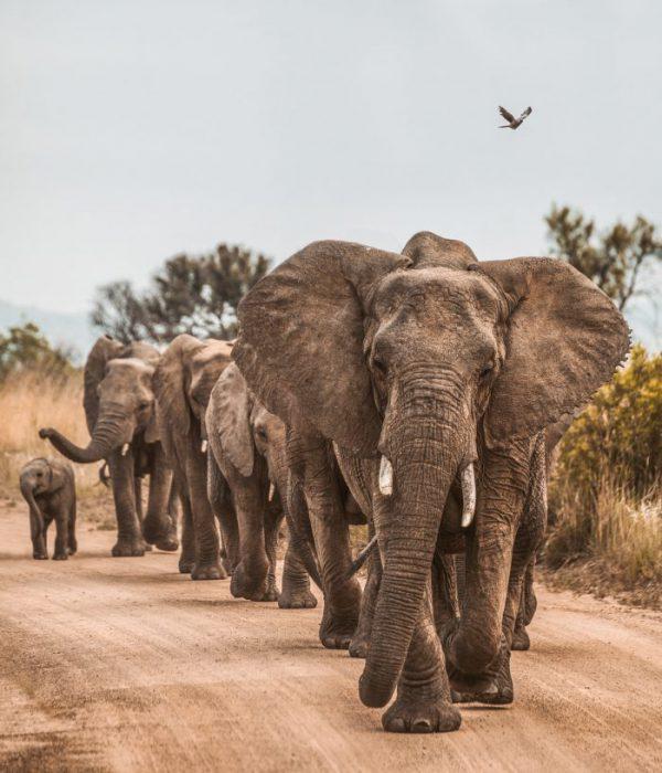 人間と野生生物が共生できる地球を作るために