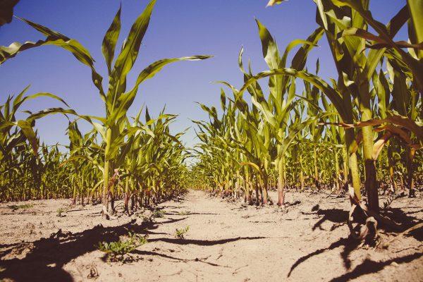 飢餓問題や気候変動の解決に役立つ? リスクゼロではない? ゲノム編集食品のメリットと課題を正しく理解しよう