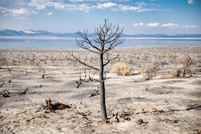 地球温暖化を食い止める期待の方法 乾燥地植林という環境保護活動を知ろう