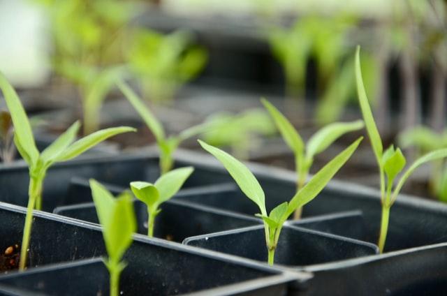 「月面農場」にも活用! 次世代型農業「植物工場」のポテンシャルと将来展望