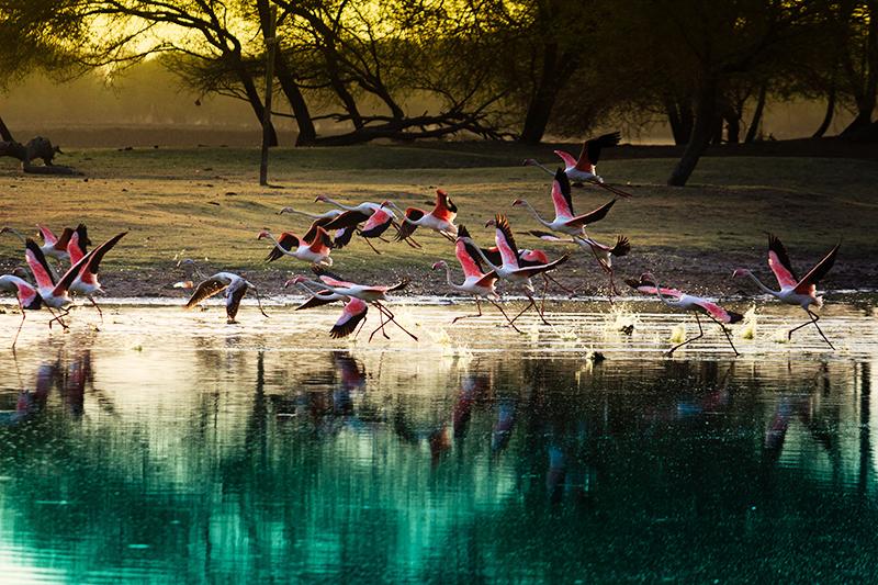 「1日で100種以上が絶滅」の衝撃 生物多様性の喪失を止めるための日本と世界の取り組み
