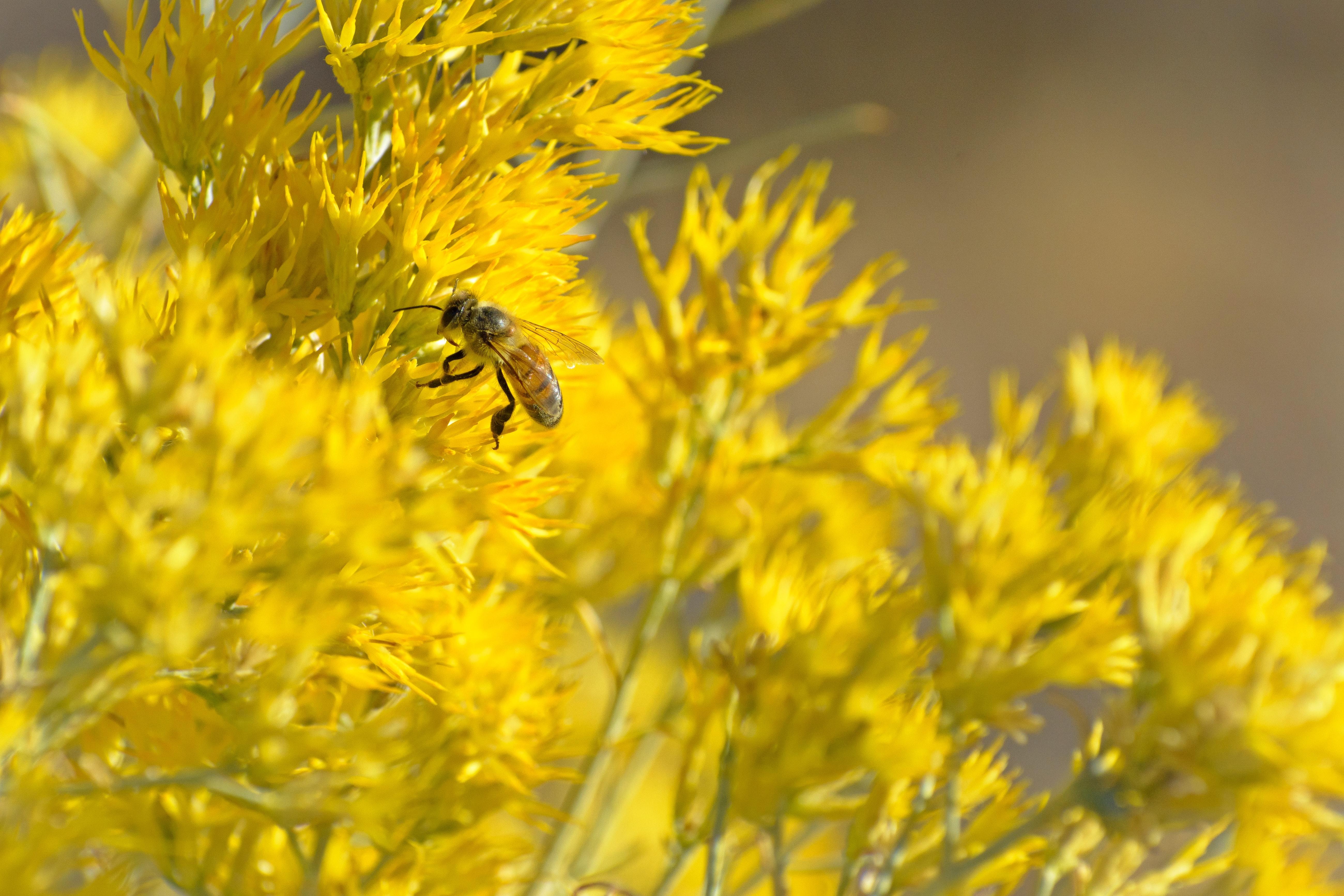 世界中でミツバチが消失し巣箱が空に? 花粉を運ぶポリネーターの役割が危機に