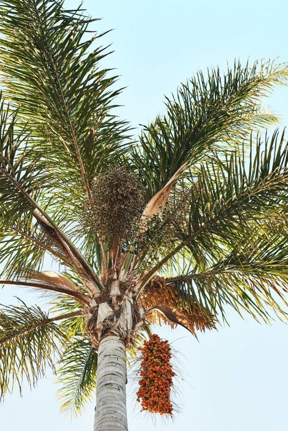 世界で最も消費されている植物油『パーム油』がもたらす環境破壊とその対策とは?