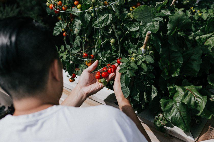 究極の地産地消?CO2削減に貢献する環境に優しい家庭菜園に挑戦しよう!