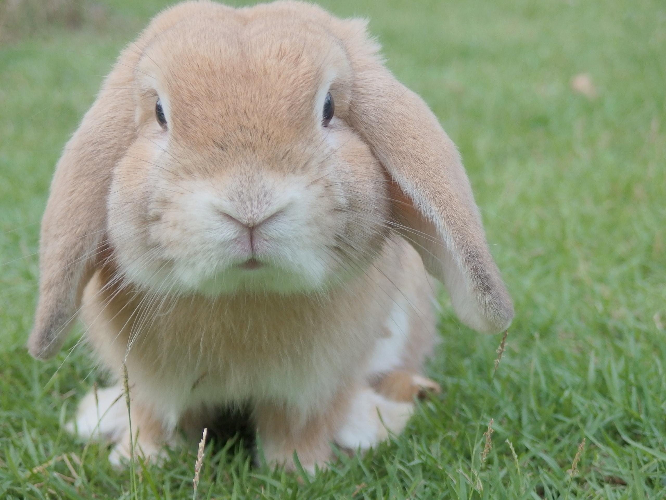 化粧品での動物実験を減らすために 「3R」「クルエルティフリー」の概念と国内外での対応