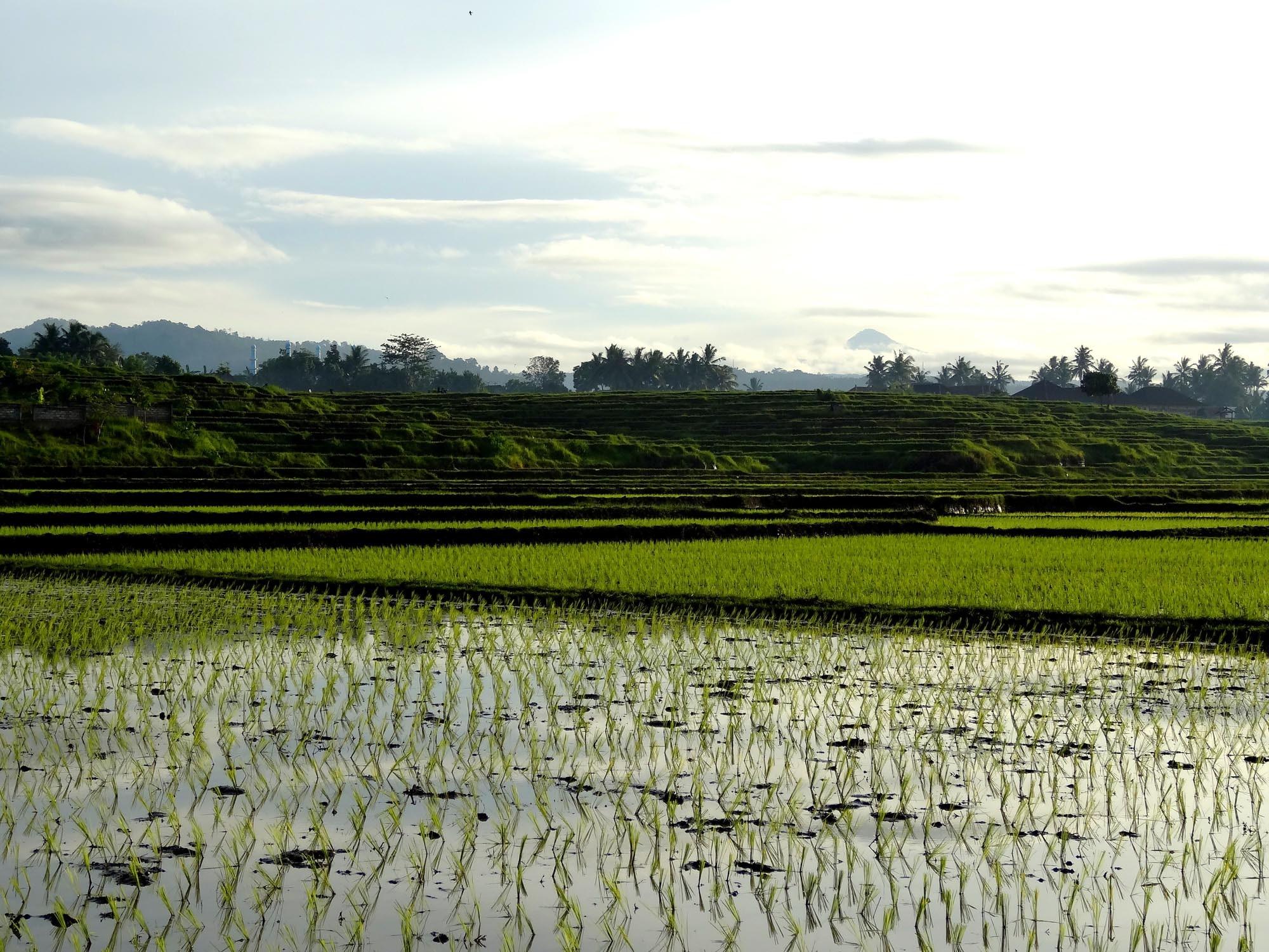 米粉は小麦粉の代用となるか?食卓を通し世界と日本の環境問題を再確認しよう