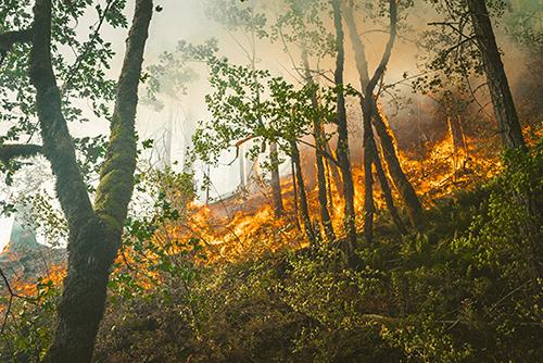 地球温暖化の影響も?山火事の原因と山火事を予防するための対策を正しく知ろう