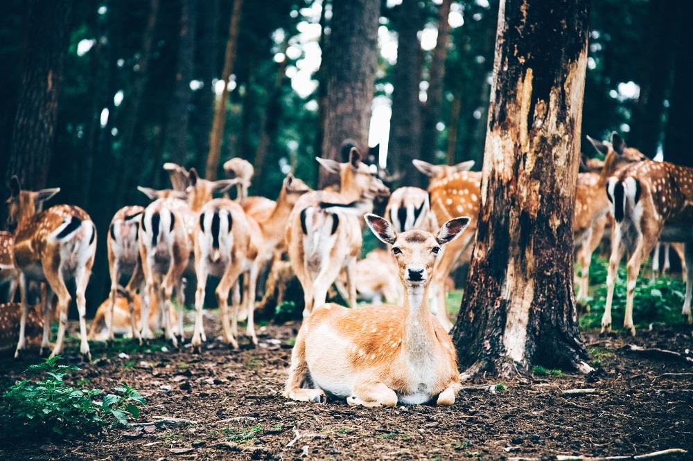 地域資源としての有効利用? 問題はない? ジビエを通して野生動物との共生について考えてみよう!